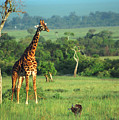 Giraffe by Sebastian Musial