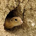 Goround Squirrel  by Cliff Norton