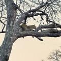 Having A Rest by Lisa Byrne
