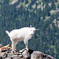 Hiking The Mount Massive Summit by Steve Krull