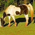 Horses  by Frank Conrad