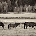 Horses Of The Fall  Bw by Jouko Lehto
