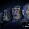 Human Evolution by Science Picture Co
