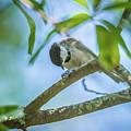 Huthatch Bird  Nut Pecker In The Wild On A Tree by Alex Grichenko