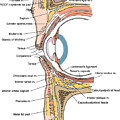 Illustration Of Eye Anatomy by Science Source