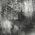 Into The Woods by Theresa Campbell