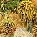 Kaktus by Yury Bashkin