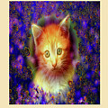 Kitten Portrait by Mitchell Watrous