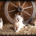 3 Little Kittens With The Wagon Wheel. by Sue Martin