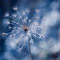 Lonely Winter by Ryan Heffron