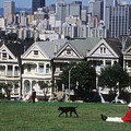 Man And Dog In Alamo Square In San Francisco by Carl Purcell