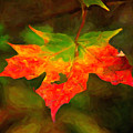 Maple Leaf by Prince Andre Faubert
