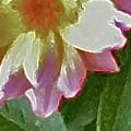 Mix Or Match Flowers  by Debra     Vatalaro