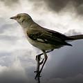 Mockingbird by Brian Wallace