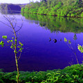 Nature by Sainuddeen Alanthi