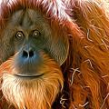 Orangutan  by Andrew Michael