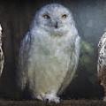 3 Owls On A Branch by Daniel Hagerman