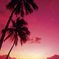 Palms Against Pink Sunset by Carl Shaneff - Printscapes