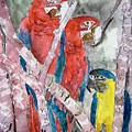 3 Parrots by Derek Mccrea