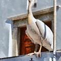 Pelican by George Atsametakis