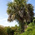 Pelican Island In Florida by Allan  Hughes