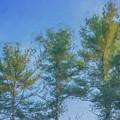 3 Pines In Last Light by Bill McEntee