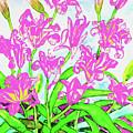 Pink Daily Lilies by Irina Afonskaya