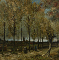 Poplars Near Nuenen by Vincent van Gogh
