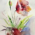 Poppy by Kovacs Anna Brigitta