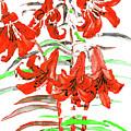 Red Lilies, Hand Drawn Painting by Irina Afonskaya