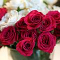 Roses by Amanda Barcon