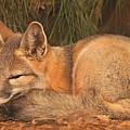 San Joaquin Kit Fox  by Brian Cross