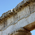 Segesta Greek Temple In Sicily, Italy by Paolo Modena