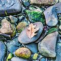 Small Rocks On The Beach by Enrico Della Pietra