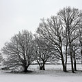 Snow On Epsom Downs Surrey Uk by Julia Gavin