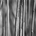 3 Stalks by Brian Pflanz