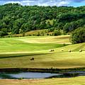 Summer Morning Hay Field by Thomas R Fletcher