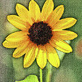 Sunflower by Tom Janca