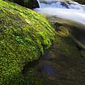 Sweet Creek Oregon 12 by Bob Christopher