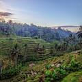 Tegalalang - Bali by Joana Kruse