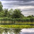 The Lily Pond  by David Pyatt