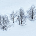 Trees by Svetlana Sewell