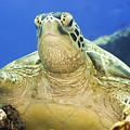 Turtle by MotHaiBaPhoto Prints