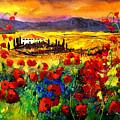 Tuscany Poppies by Pol Ledent