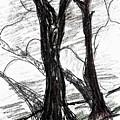 Two Tree by Hae Kim