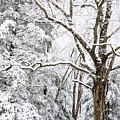 Winter In Monongahela National Forest by Thomas R Fletcher