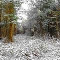 Winter Time by Svetlana Sewell