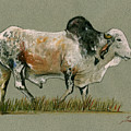 Zebu Cattle Art Painting by Juan  Bosco