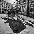 Seville Sevilla Andalucia Spain by Paul James Bannerman