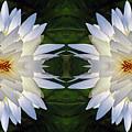 White Lotus Mandala by Daniel Unfried